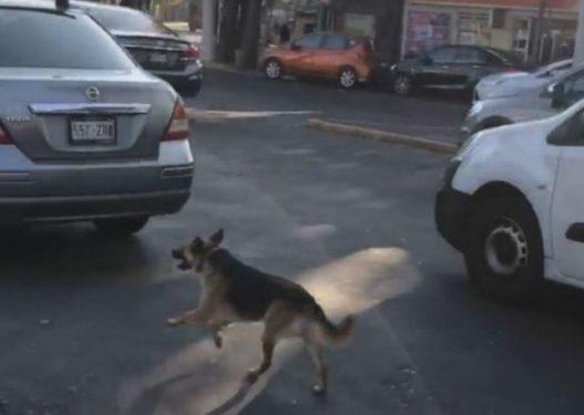Prekëse/ I zoti e braktis në mes të rrugës, qeni e ndjek me vrap nga pas makinës
