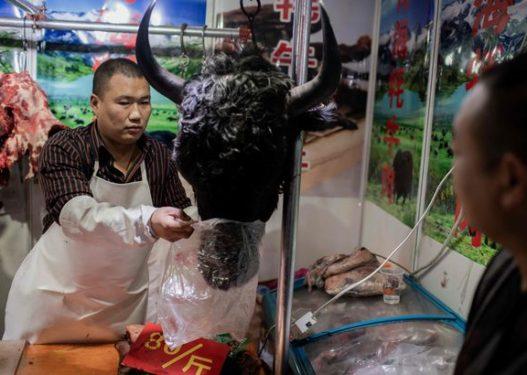 Bota në panik prej koronavirusit/ Në Kinë ndalohet shitja e kafshëve të gjalla