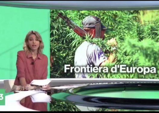 RAI3 publikon raportin sekret: Prodhimi i kanabisit në Shqipëri u rrit me mbi 1200%.