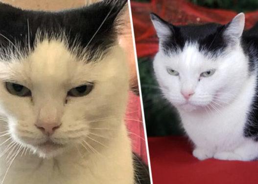 Perdita, macja më e keqe në botë kërkon një familje adoptuese