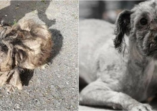 Transformohet mrekullisht falë përkujdesjes qenushi, ka nevojë për trajtim në Itali