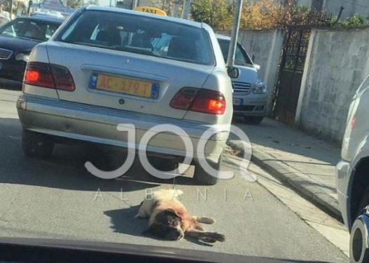 Procedohet penalisht 67-vjeçari që tërhoqi qenin zvarrë me makinë