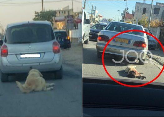 Përsëritet ngjarja e tmerrshme, qytetari nga Durrësi tërheq zvarrë me makinë qenin