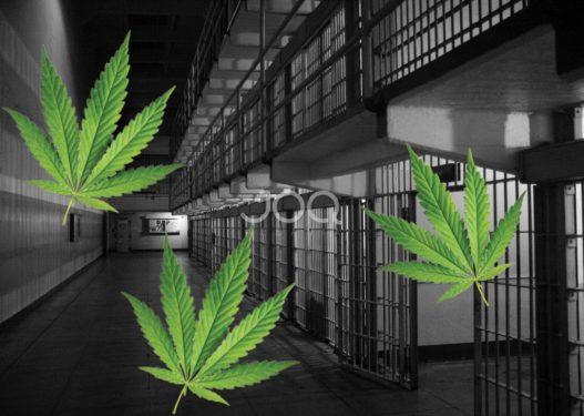 Habit profesori britanik: Nëpër burgje të shpërndahet kanabis falas për të dënuarit