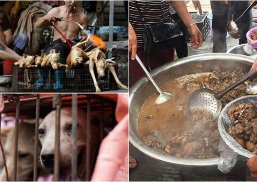 Nis 'festivali' i mishit të qenit në Kinë, 5 mijë kafshë do të theren në 10 ditë