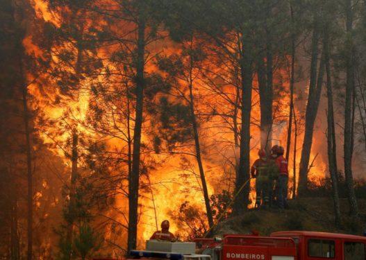 Zjarri masiv në Vlorë/ Shefi i Zjarrfikësve: Nuk kemi mjete, nuk shkojmë dot në disa vatra