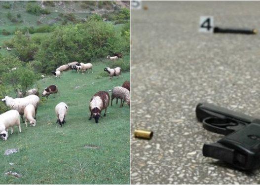 Po kulloste bagëtitë në mal/ Si u vra 13-vjeçari nga Kurbini, gjeti armën bashkë me tre shokët e tij