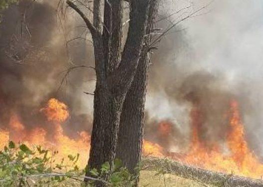 Vatër e re zjarri në Memaliaj/ Shkrumbohen 50 hektarë tokë, zjarrfikësja nuk ka shkuar ende
