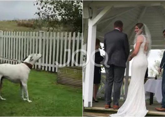 Moment i sikletshëm në dasmë/ Prifti pyet a ka njeri kundër, qeni nis të lehë