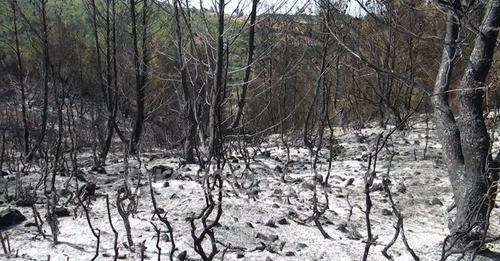 Zjarri masiv në Mamurras/ Kurora e pishave e shkrumbuar, dyshohet se zjarri ishte i qëllimshëm