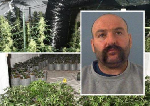 """U kap brenda fabrikës masive të kanabisit në Angli, arrestohet """"kopshtari"""" shqiptar"""