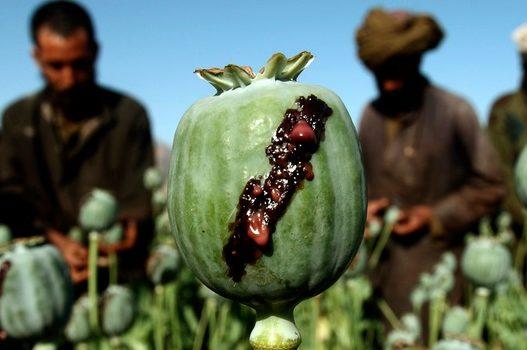 Tjetër sasi rekord/ Kapen tre ton heroinë e ardhur nga Afganistani, kush kontrollon tregun?
