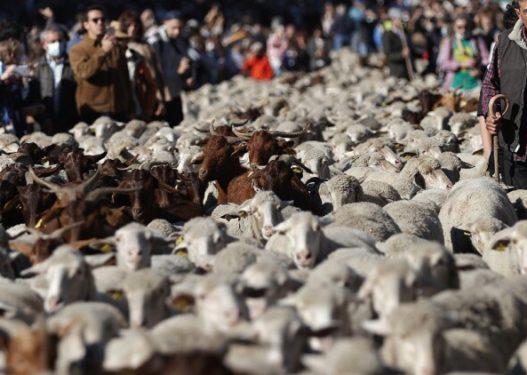 """Kryeqyteti europian """"pushtohet"""" nga delet!"""