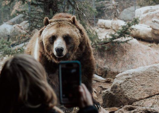 Erion Veliajt nuk i dalin 7 miliardë për Kopshtin Zoologjik, i jep 1 miliard shtesë Paqsor Buzit me shokë