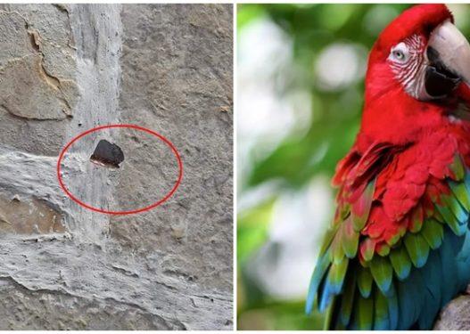 Të shtëna me armë zjarri në Dhërmi, vritet një papagall